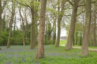 A view of the House through the Bluebell Wood